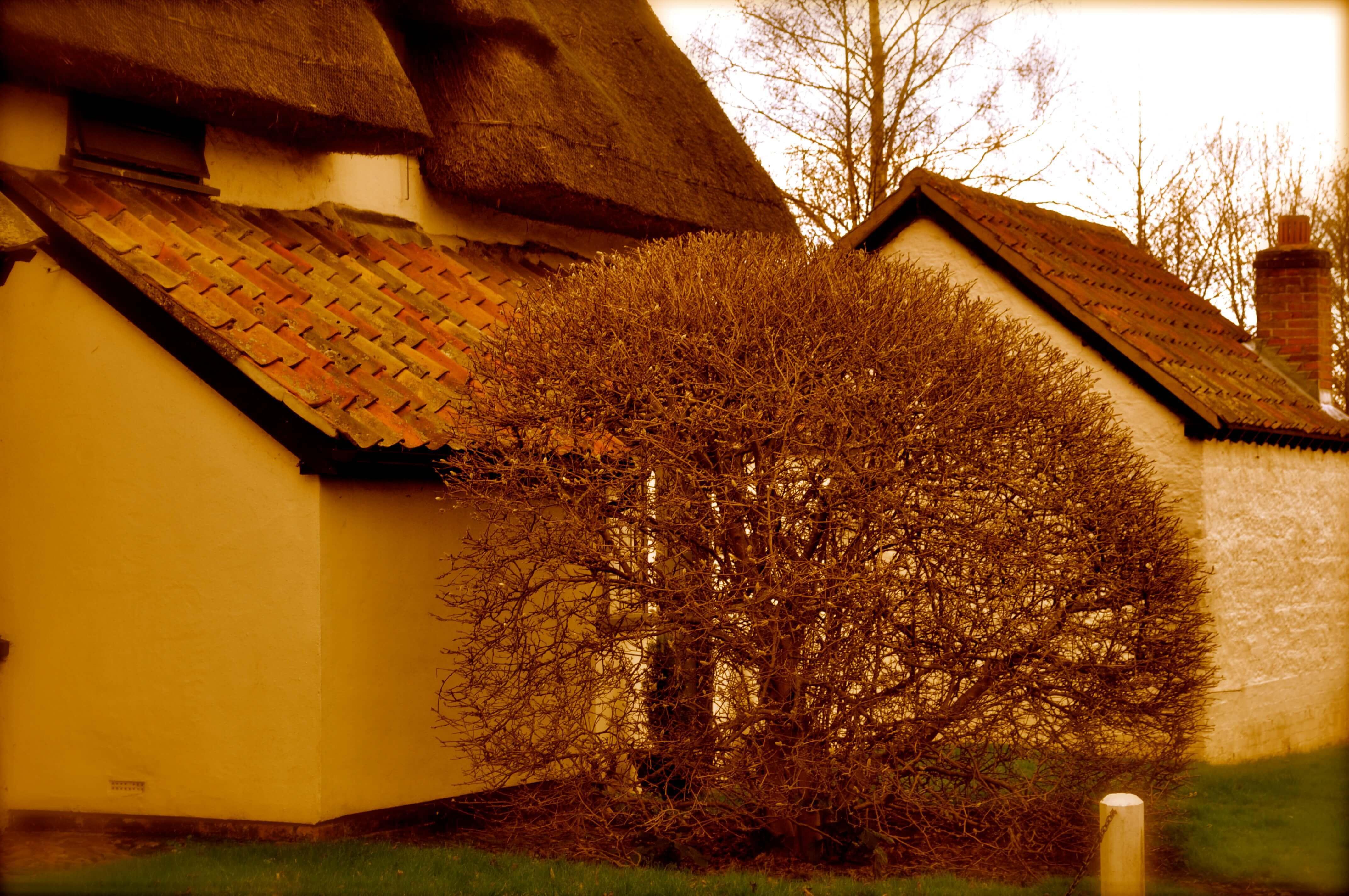 ASHWELL_village_GarytrotmanPhotoZ_007